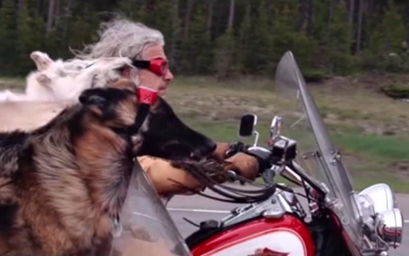 motoros kutyak 2