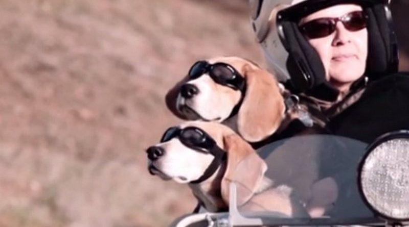 motoros kutyak 4