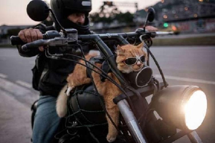 macska a motoron